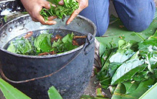Ayahuasca and master plant dieta 7
