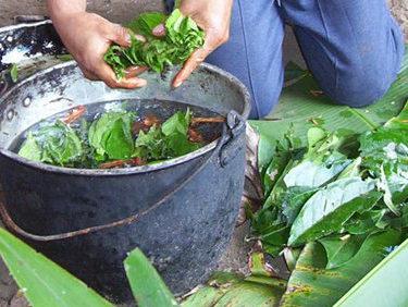 Ayahuasca and master plant dieta 1